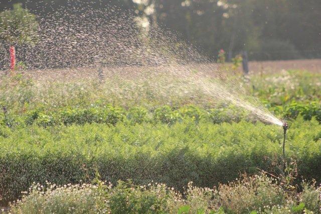 3 entretien de potager coachpotager - Arrosage jardin potager ...