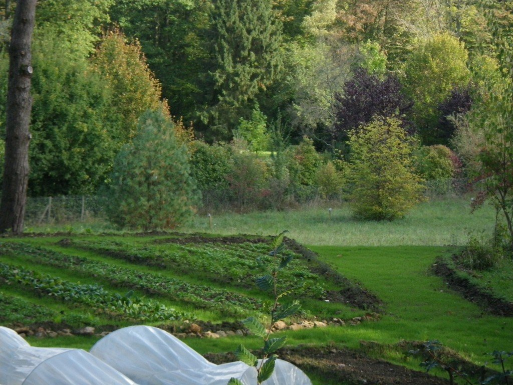 2 creation de potager coachpotager for Creation jardin
